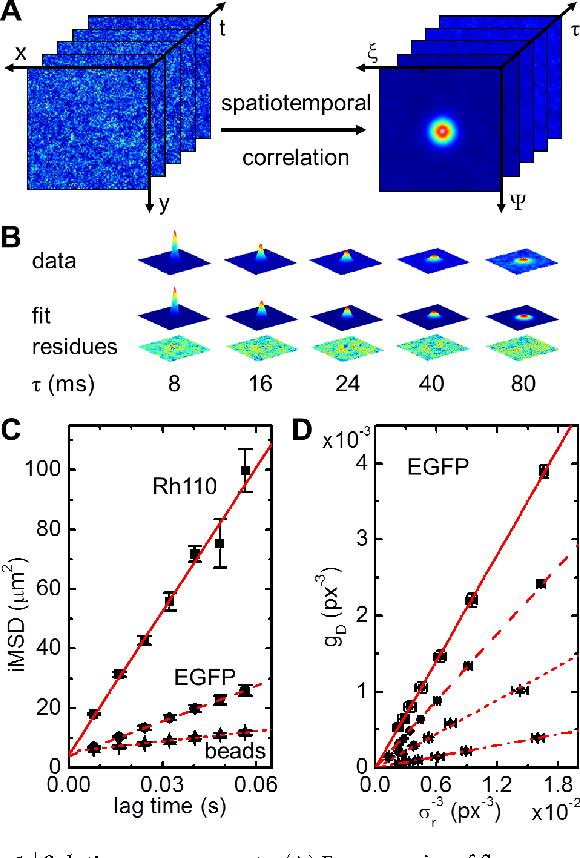 fluorescence fluctuation spectroscopy ffs part b tetin sergey