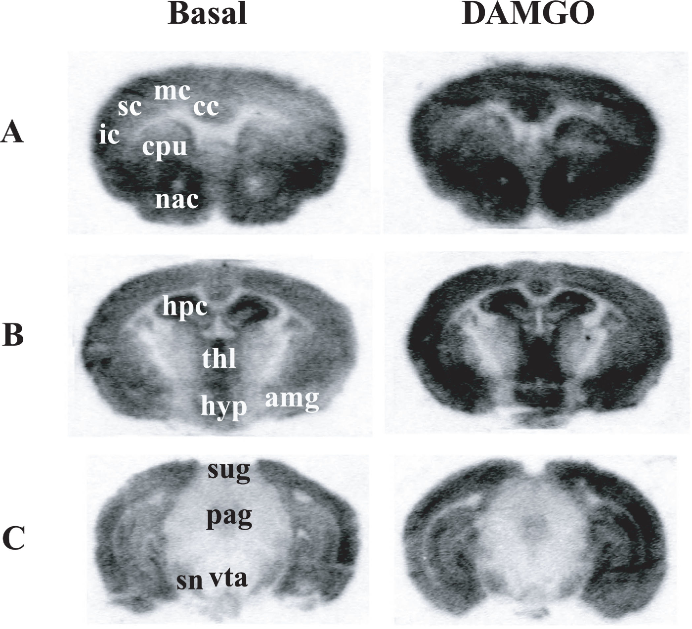 Insular Cortex Alterations In Mouse >> Figure 1 From Brain Region And Sex Specific Alterations In Damgo