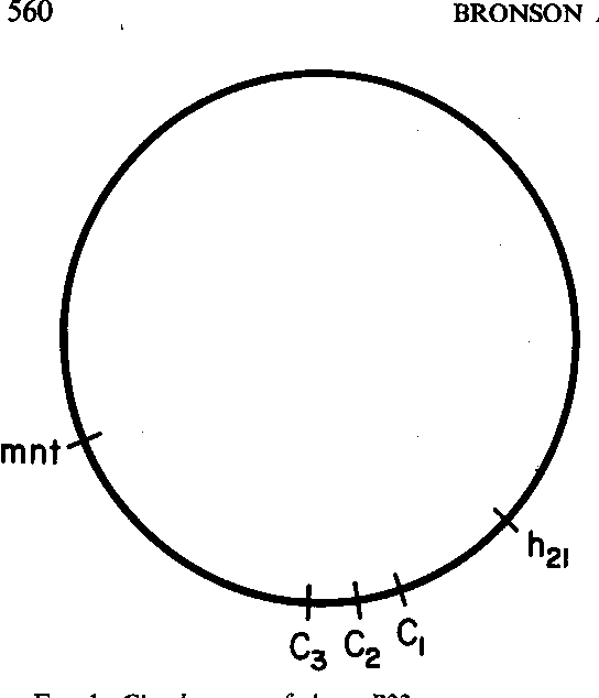 FIG. 1. Circular map ofphage P22.