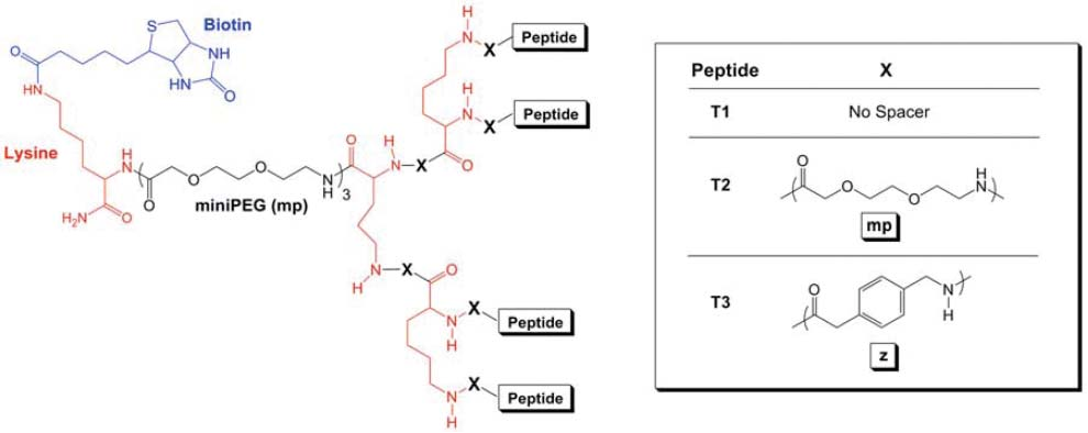 Figure 1 from Refined multivalent display of bacterial spore