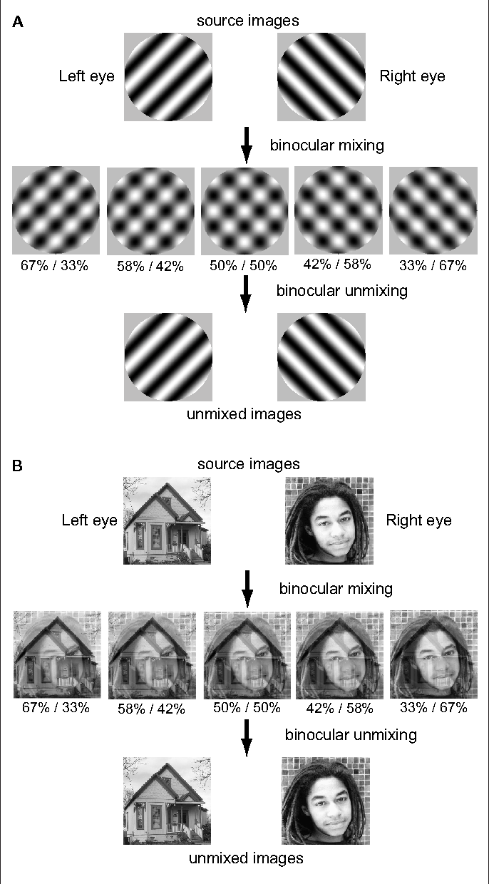 Figure 1 | Schematic of image mixing and unmixing process.
