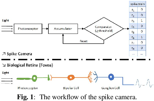 Figure 1 for A Retina-inspired Sampling Method for Visual Texture Reconstruction