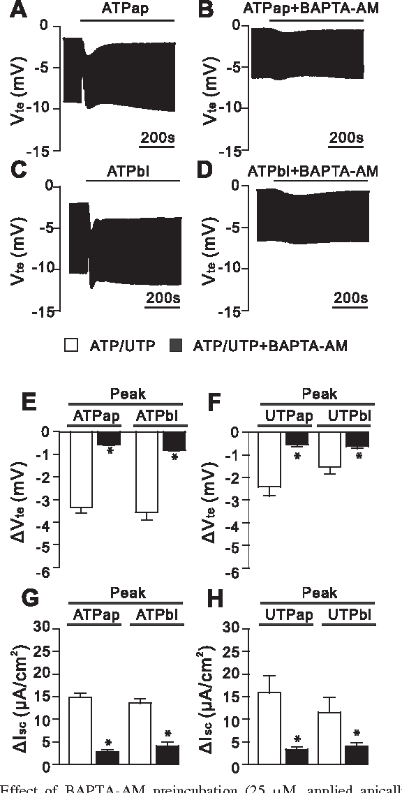 Purinergic regulation of CFTR and Ca(2+)-activated Cl