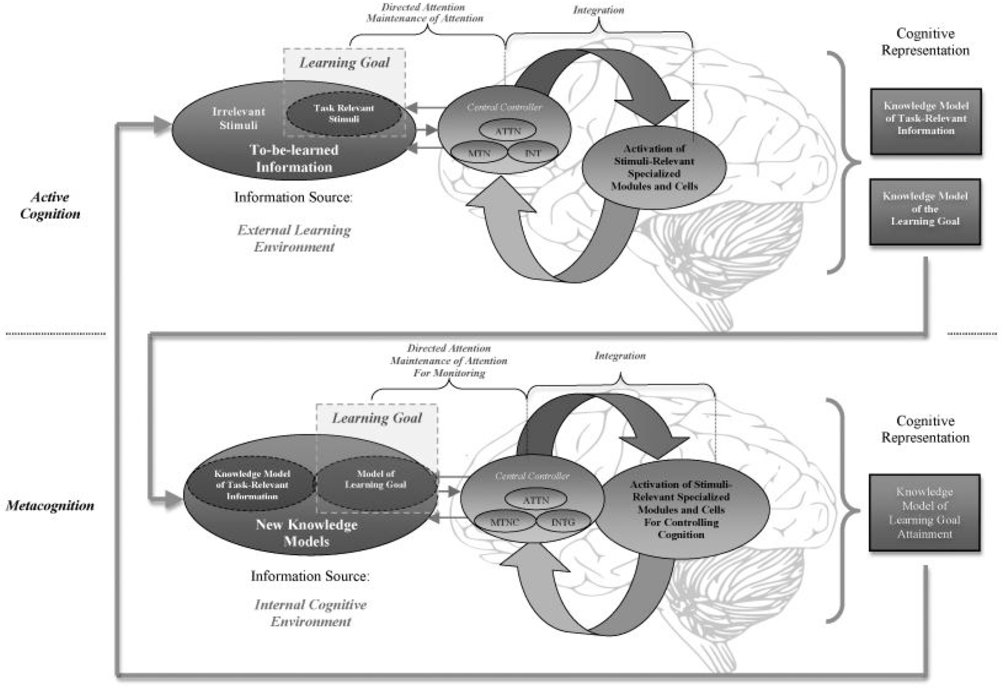 Metacognition A Biased Competition Model 1 Metacognition A