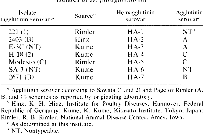 PDF] Comparison of hemagglutinin and agglutinin schemes for