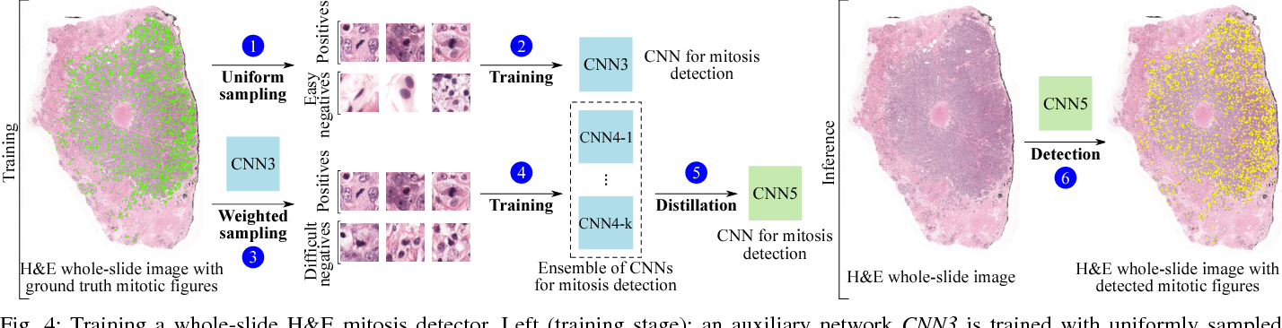 Figure 4 for Whole-Slide Mitosis Detection in H&E Breast Histology Using PHH3 as a Reference to Train Distilled Stain-Invariant Convolutional Networks