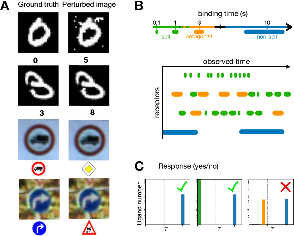 Figure 1 for Fooling the classifier: Ligand antagonism and adversarial examples