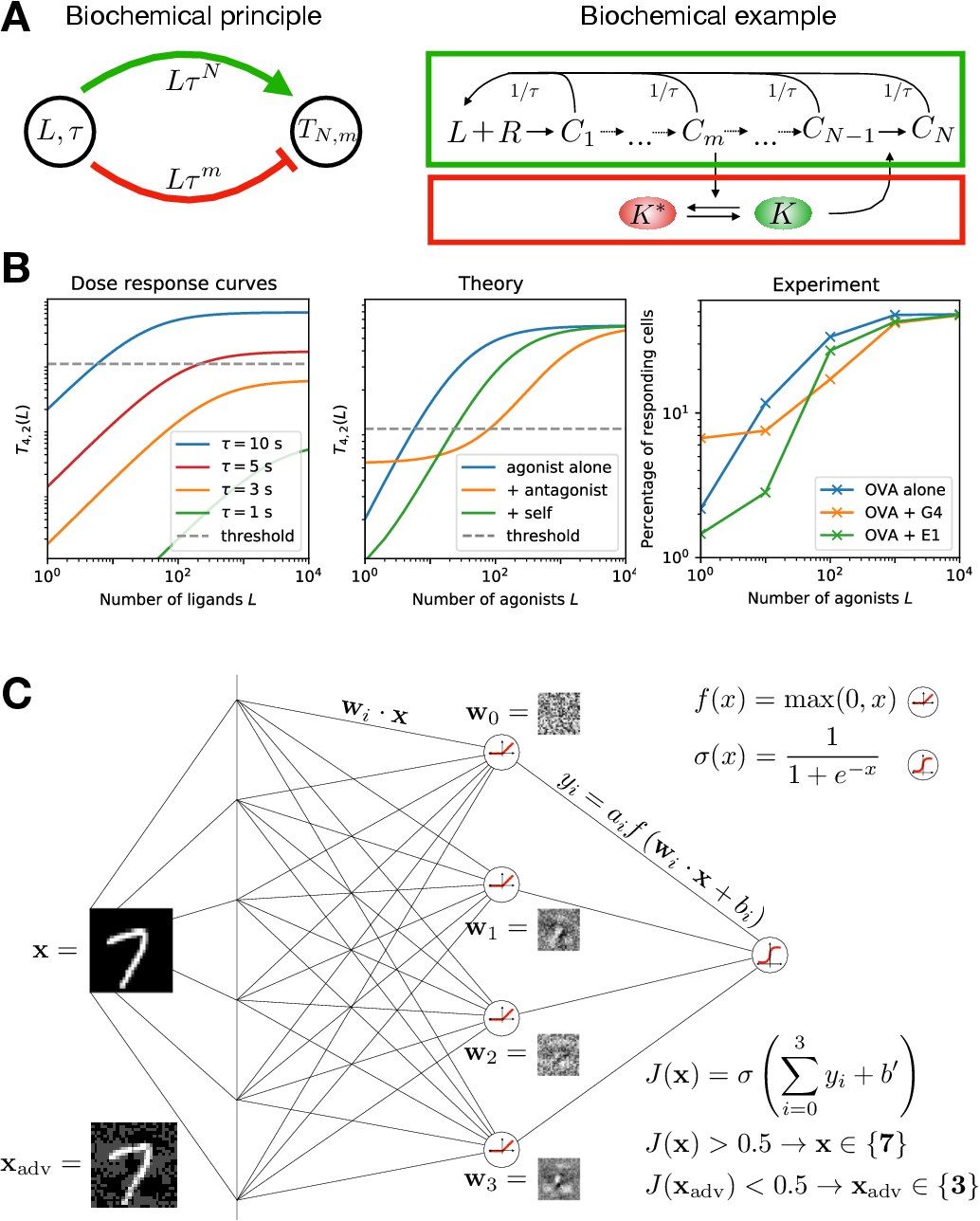 Figure 3 for Fooling the classifier: Ligand antagonism and adversarial examples