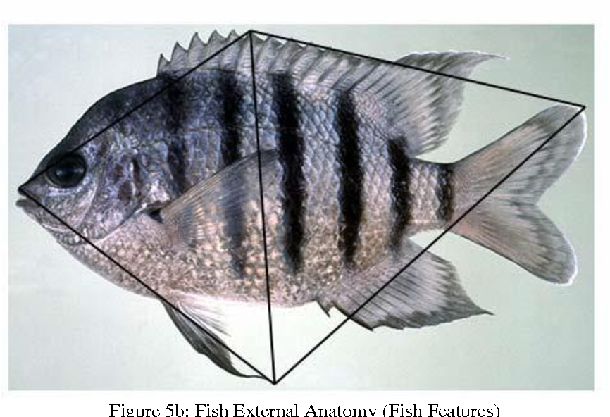 Figure 5 from - 9359 ( Volume-3 , Issue-5 ) Shape-Based Fish ...