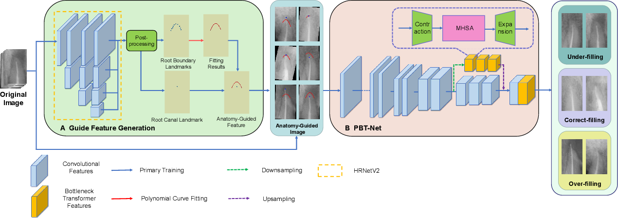 Figure 3 for Anatomy-Guided Parallel Bottleneck Transformer Network for Automated Evaluation of Root Canal Therapy