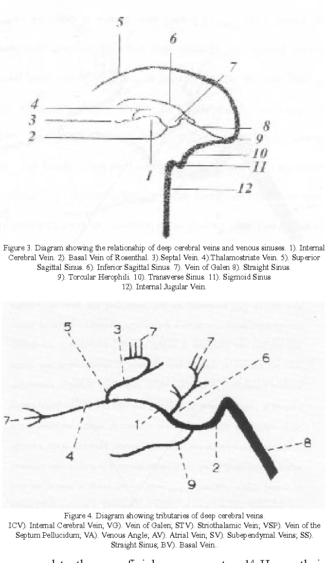 Figure 4 From Cerebral Venous System Anatomy Semantic Scholar