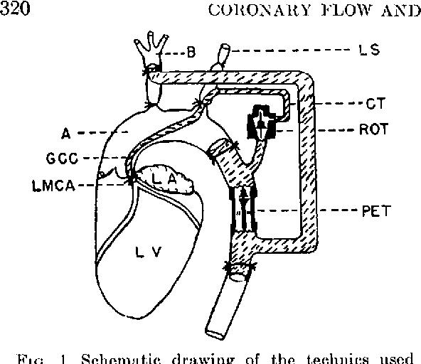 Figure 1 From Ventricular Function Ii Quantitative Relationship