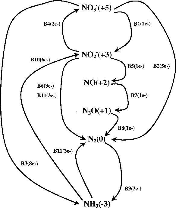 Figure 8 From Energetics Of Overall Metabolic Reactions Of