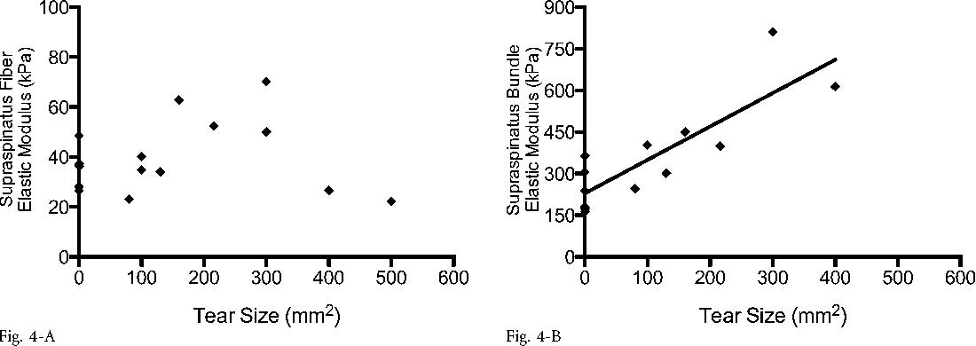 Effect Of Supraspinatus Tendon Injury On Supraspinatus And