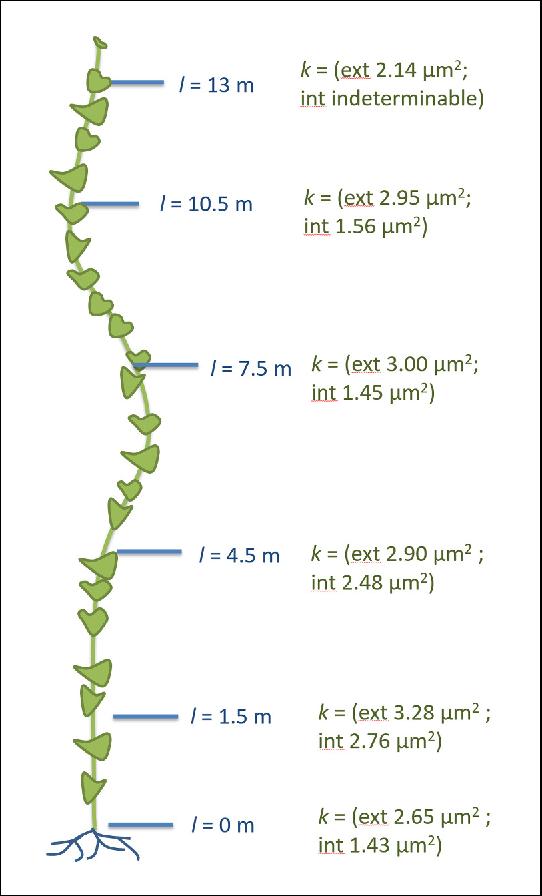 PDF] Testing the Münch hypothesis of long distance phloem transport
