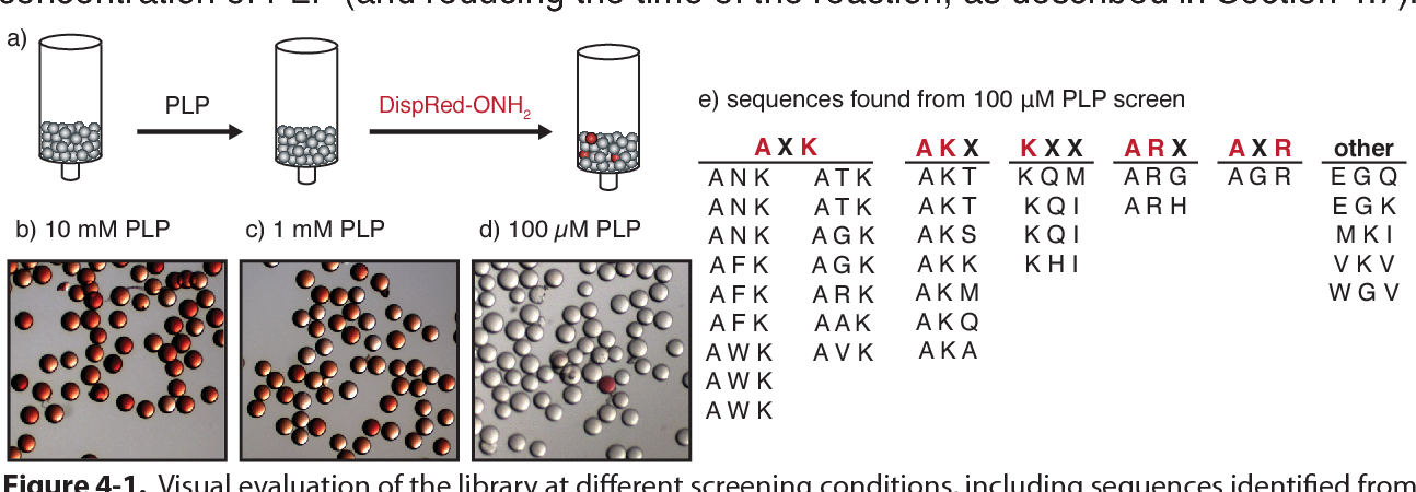 PDF] Optimization of Protein Bioconjugation Reactions Using
