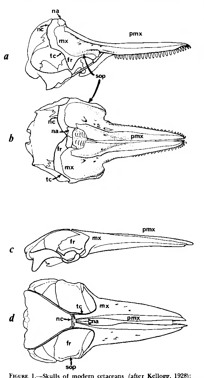 Figure 1 from Anatomy of the External Nasal Passages and Facial ...