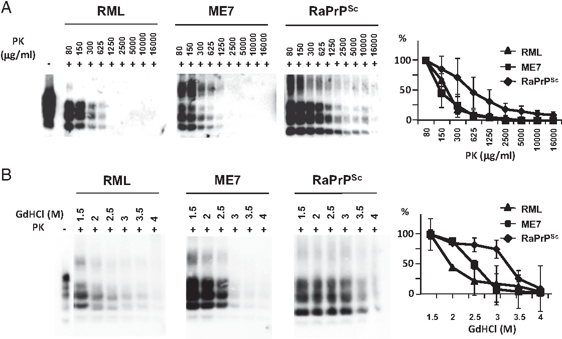 Figure 3 from rabbits are not resistant to prion infection proteinase k and guanidine denaturation studies using an in vivo rabbit prion ccuart Images