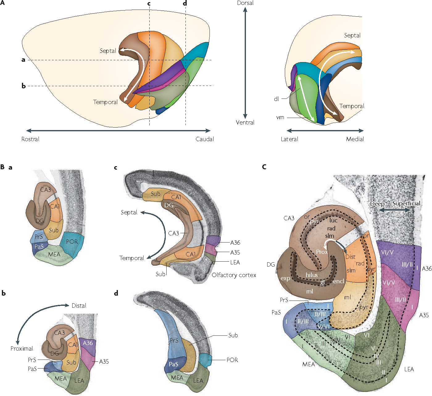 The anatomy of memory: an interactive overview of the ...