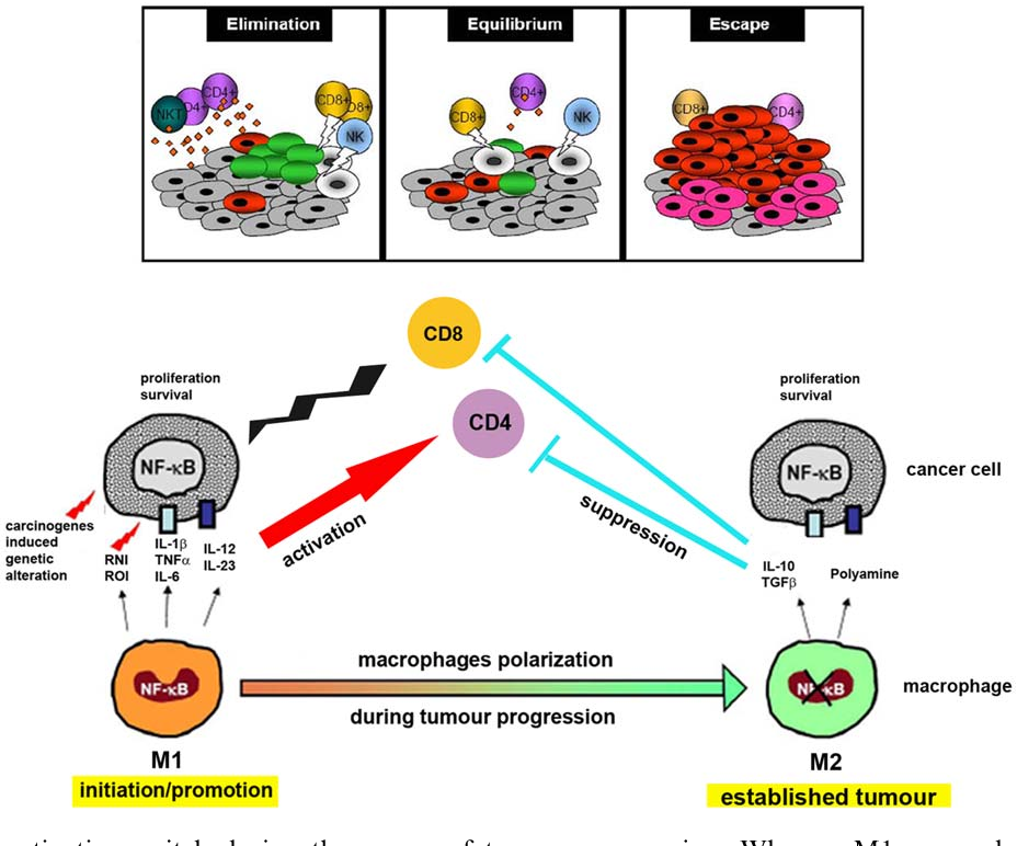 Key Molecule May Tie Immune Response To >> Figure 3 From Cellular And Molecular Pathways Linking Inflammation