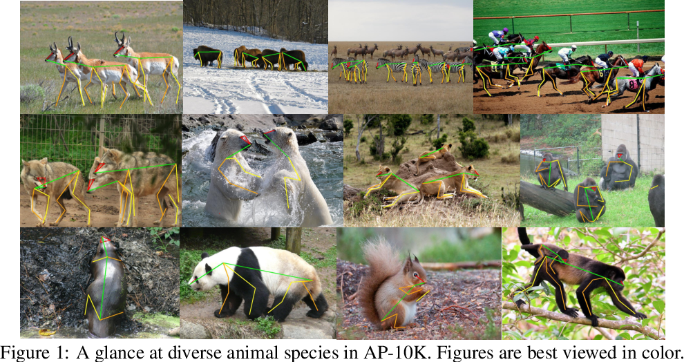 Figure 1 for AP-10K: A Benchmark for Animal Pose Estimation in the Wild