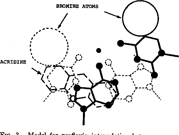 Figure 3 From Spin Orbital Probes Of Biomolecular Structure A Model