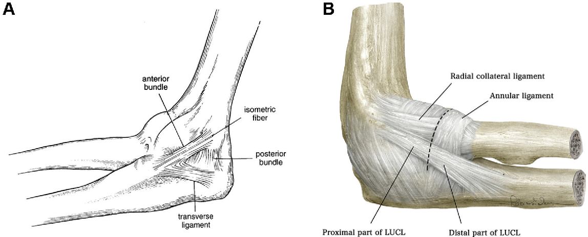 Figure 1 From Physical Examination Of The Athletes Elbow