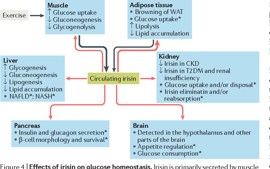 Physiology and role of irisin in glucose homeostasis..