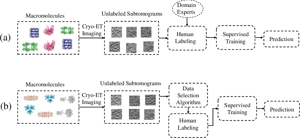 Figure 1 for Active Learning to Classify Macromolecular Structures in situ for Less Supervision in Cryo-Electron Tomography