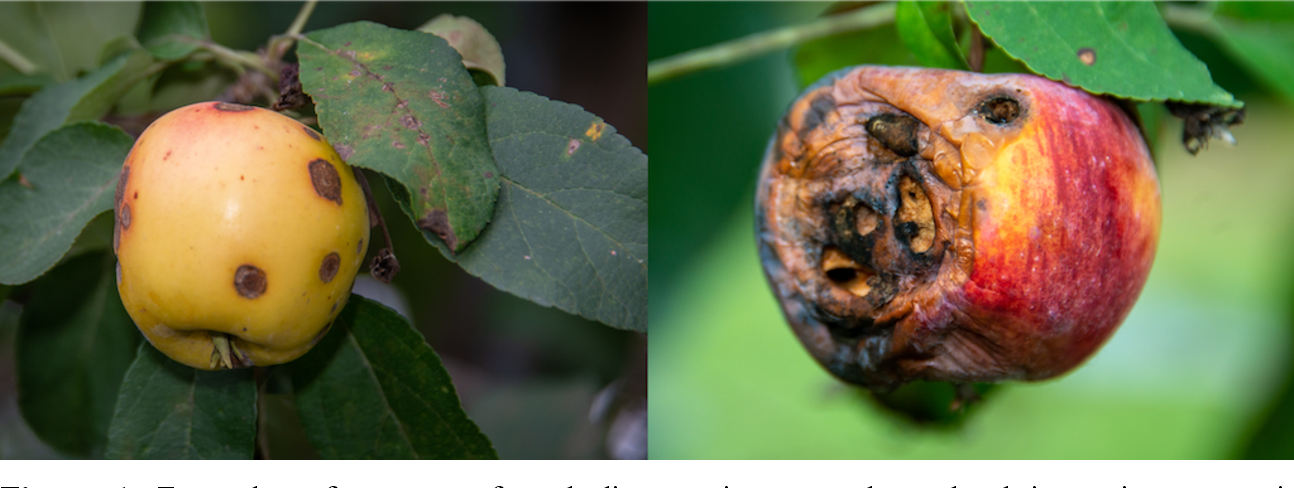 Figure 1 for The Plant Pathology 2020 challenge dataset to classify foliar disease of apples