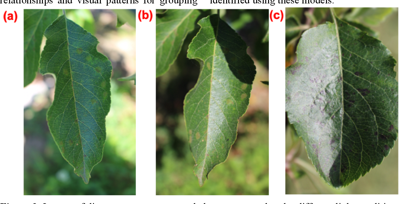Figure 2 for The Plant Pathology 2020 challenge dataset to classify foliar disease of apples