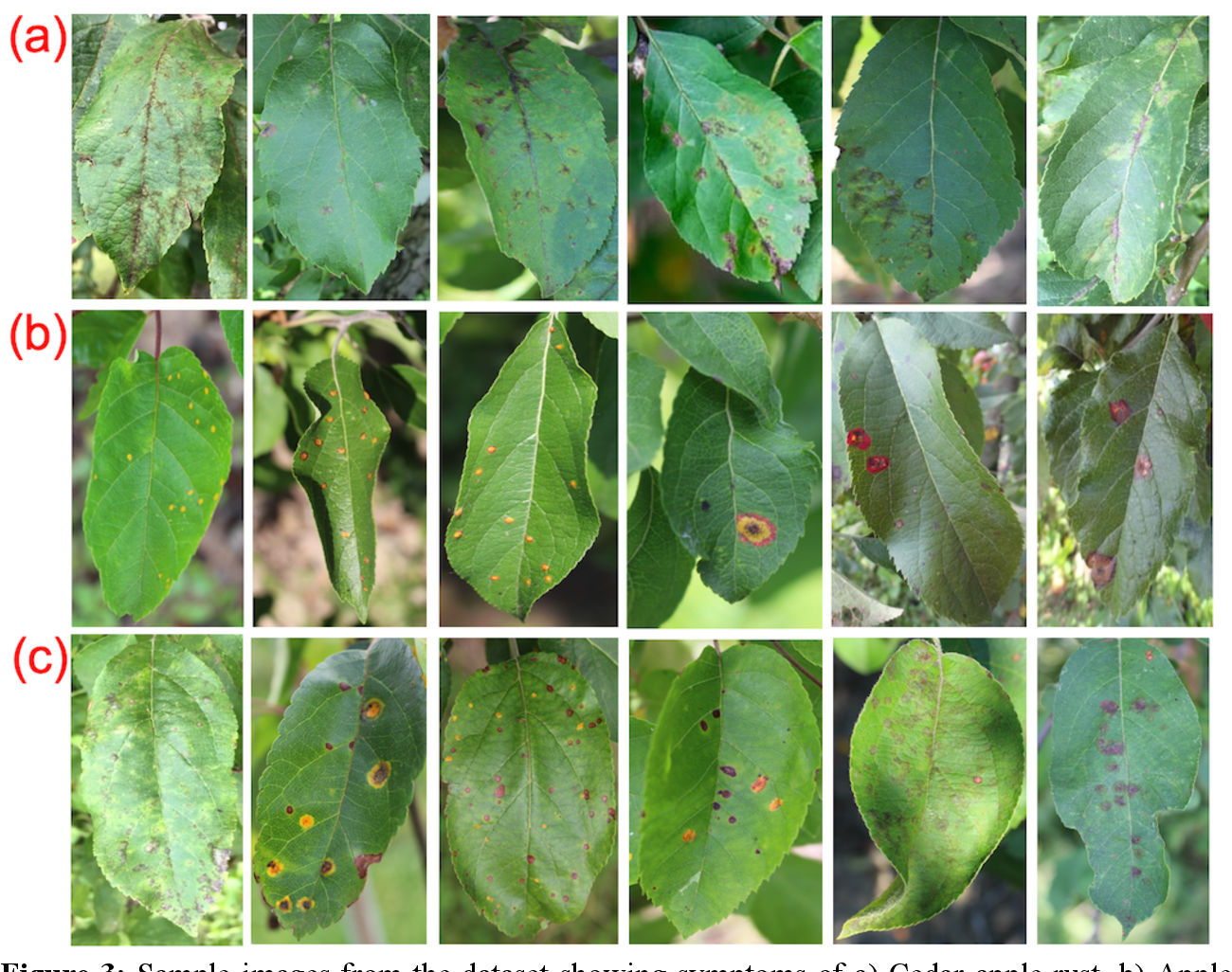Figure 3 for The Plant Pathology 2020 challenge dataset to classify foliar disease of apples