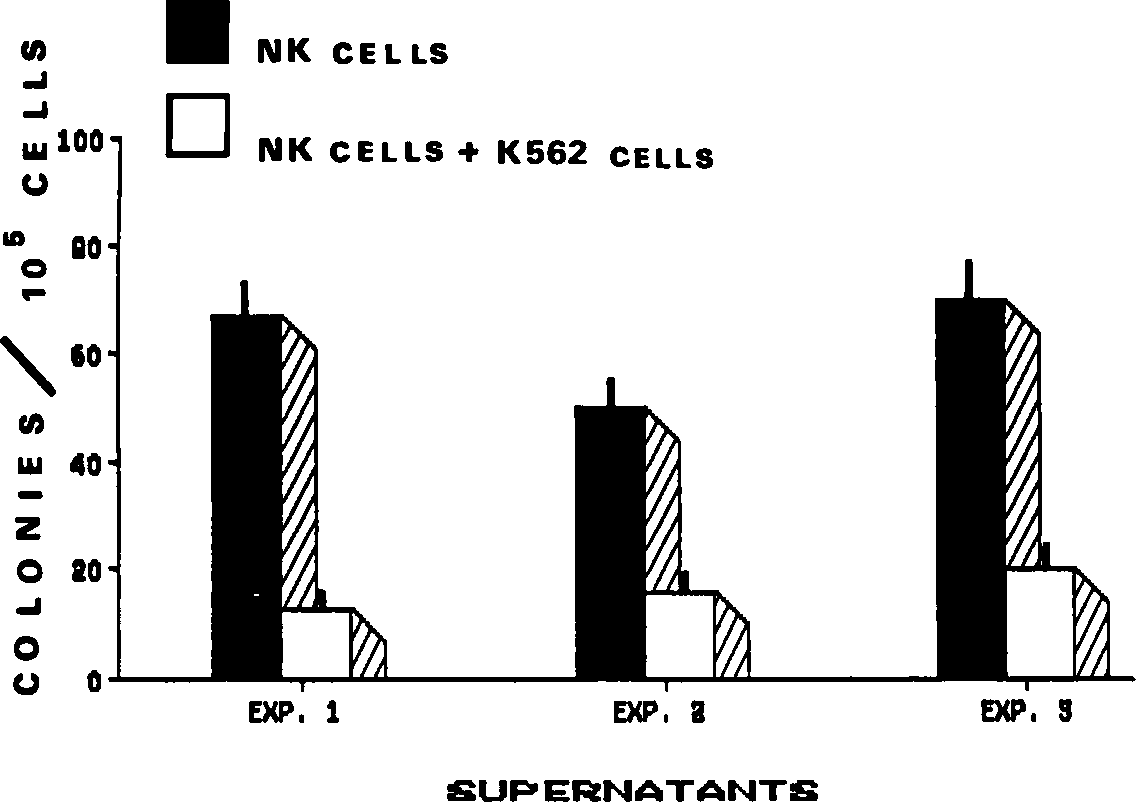 Fig 2. CIA in supernatants of NK cells. NK cells (CD16 non-T cells) were cultured overnight with or without irradiated K562 cells at a 5:1 ratio. Supernatants were subsequently harvested and tested for CIA at the 10% final dilution. The CIA assay was carried out by culturing 1 0' bone marrow cells. depleted of E rosetting and of adherent cells, in the presence of the GCT-conditioned medium (as a source of exogenous CSA) and of NK cell supernatants (as potential source of CIA). Colonies were counted after 1 4 days in culture. Results are means ± SE from triplicate cultures. Bone marrow cells cultured with GCT alone gave respectively 50 ± 6 colonies in experiment 1 #{149}38 ± 3 colonies in experiment 2. and 52 ± 6 colonies in experiment 3. K562 supernatants did not contain detectable CIA.