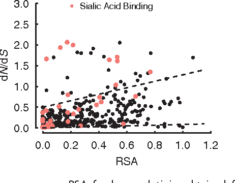 FIG. 4. Average ! versus RSA for hemagglutinin, obtained from the optimal model (three slopes and three intercepts). Dashed lines indicate the trapezoidally shaped neutral baseline (as ascertained by eye). Sites highlighted in red are within 8 Å of the sialic acid-binding region. Sites above the upper dashed line are significantly enriched in sites near the sialic acid-binding region (Fisher's exact test, OR = 6.6, P ¼ 6:1 10 5).