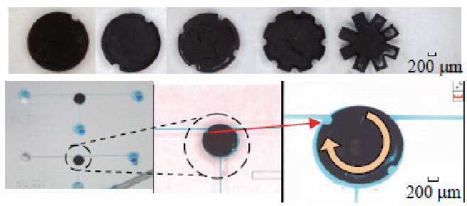 Figure 9 shows two kinds of micro magnetic tools which have a valve function in the microfluidic environment. The convex shape and triangle head shape micromagnetic tools move smoothly to narrow the micro channel normal to the micromagnetic tools in order to block transportation of cells, whilst blocked water medium find the path to flow toward the downstream by using a fine bypass of microchannel (≈ 50 μm) which is less than the size of polystyrene beads (100 μm). Eventually, the polystyrene beads can be blocked until the micromagnetic tools has back to the initial position. Figures 10(a)-(e)and (f)-(j) show the transportation of a group of beads. It is confirmed that the micromagnetic tools have a proper on/off function of valve and smooth transportation of beads toward the downstream.
