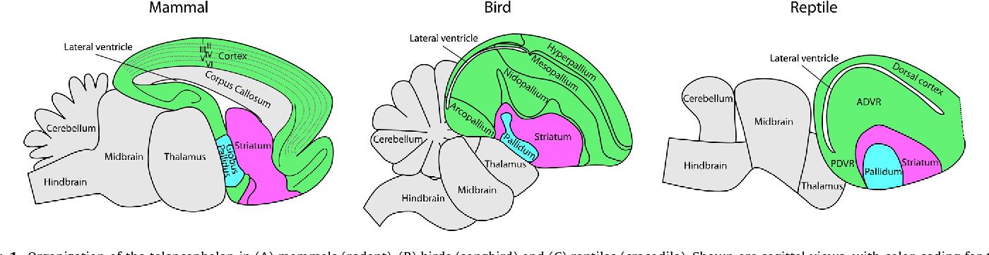 Figure 1 From An In Depth View Of Avian Sleep Semantic Scholar