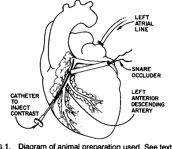 FIG 1. Diagram of animal preparation used. See text for details.