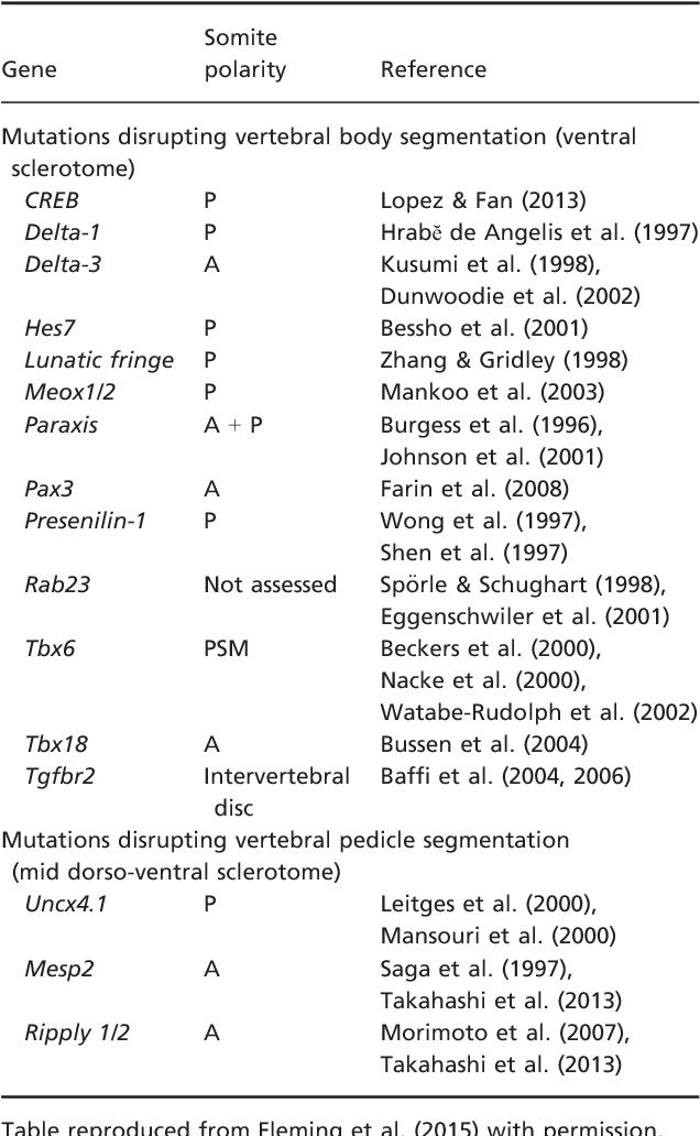 Table 1 From Patterning Spinal Nerves And Vertebral Bones
