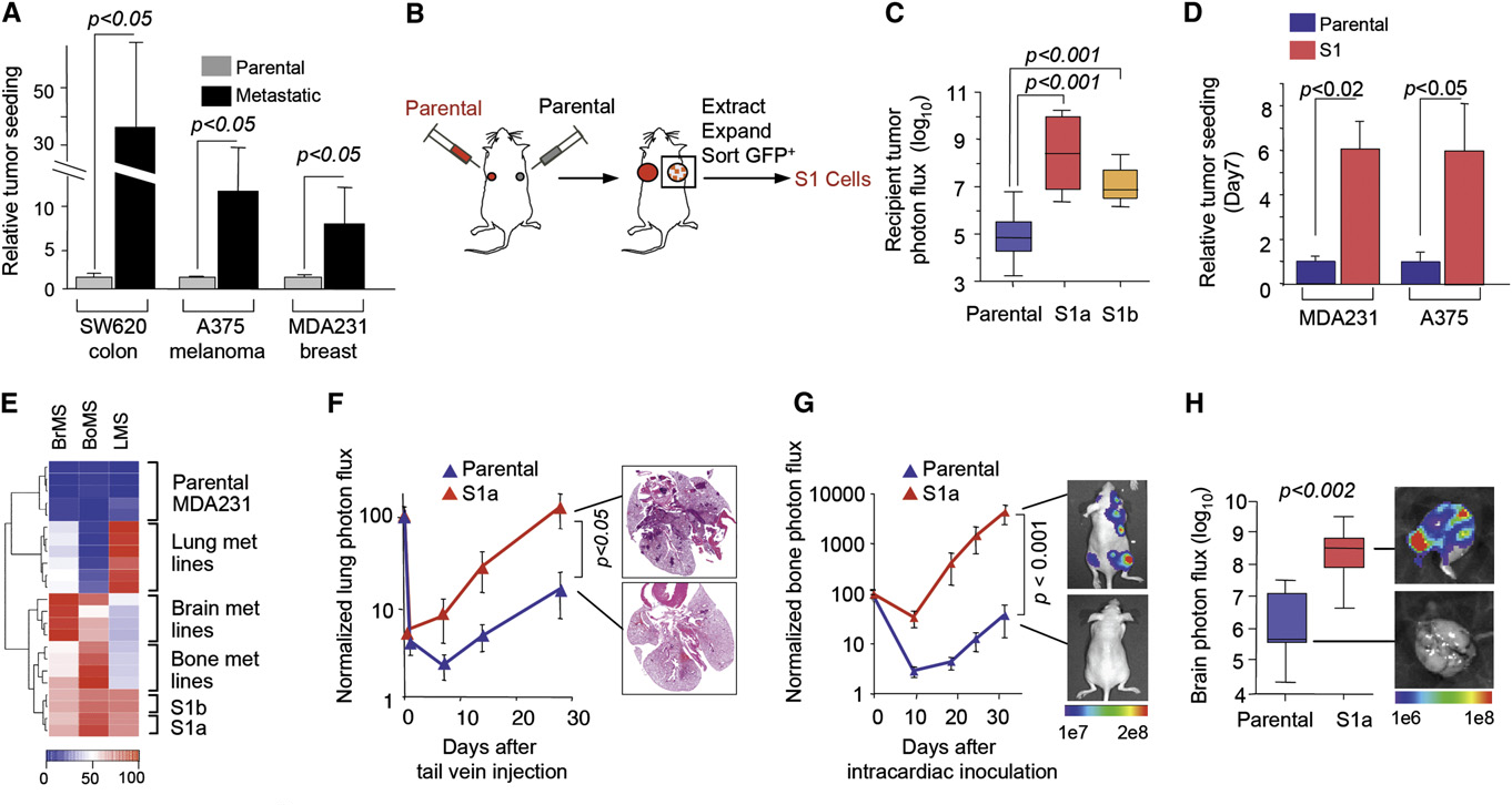 Tumor Self-Seeding by Circulating Cancer Cells - Semantic Scholar
