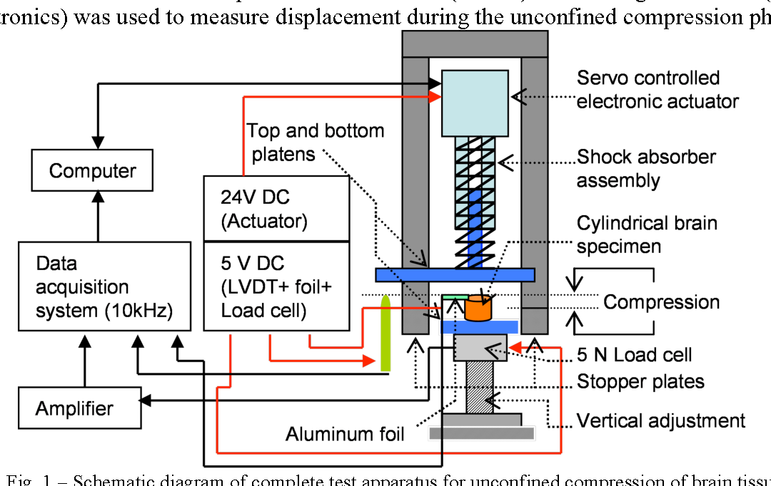 figure 1 from determination of friction coefficient in unconfined Rat Brain Diagram