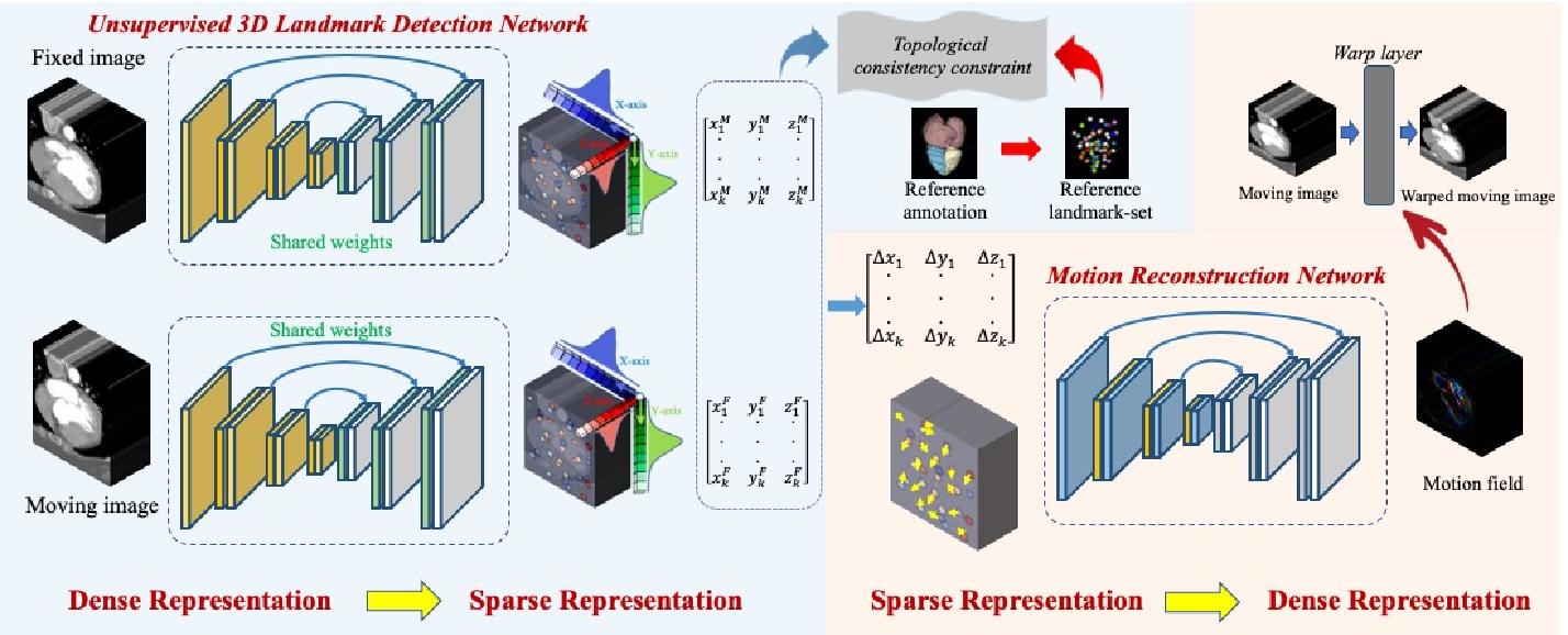 Figure 3 for Unsupervised Landmark Detection Based Spatiotemporal Motion Estimation for 4D Dynamic Medical Images