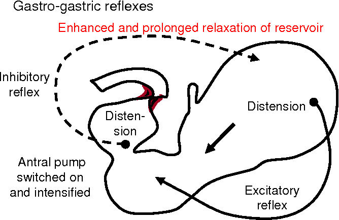 Figure 9 Gastro Gastric Reflexes Provide Balance Between Reservoir And Antral Pump Distension