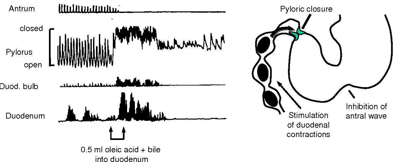 Figure 11 From Gastrointestinal Motility Semantic Scholar