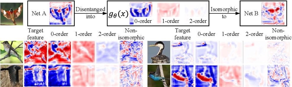 Figure 1 for Knowledge Isomorphism between Neural Networks