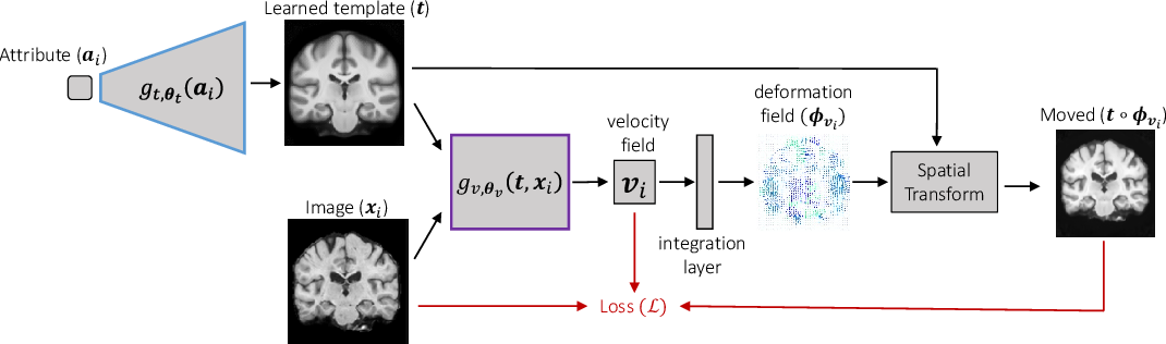 Figure 2 for Learning Conditional Deformable Templates with Convolutional Networks