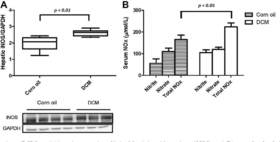 Fig. 2. Effects of dichloromethane (DCM) on (A) hepatic expression of inducible nitric oxide synthase (iNOS), and (B) serum levels of nitrite/nitrate (NOx) in rats 4 hours after treatment.