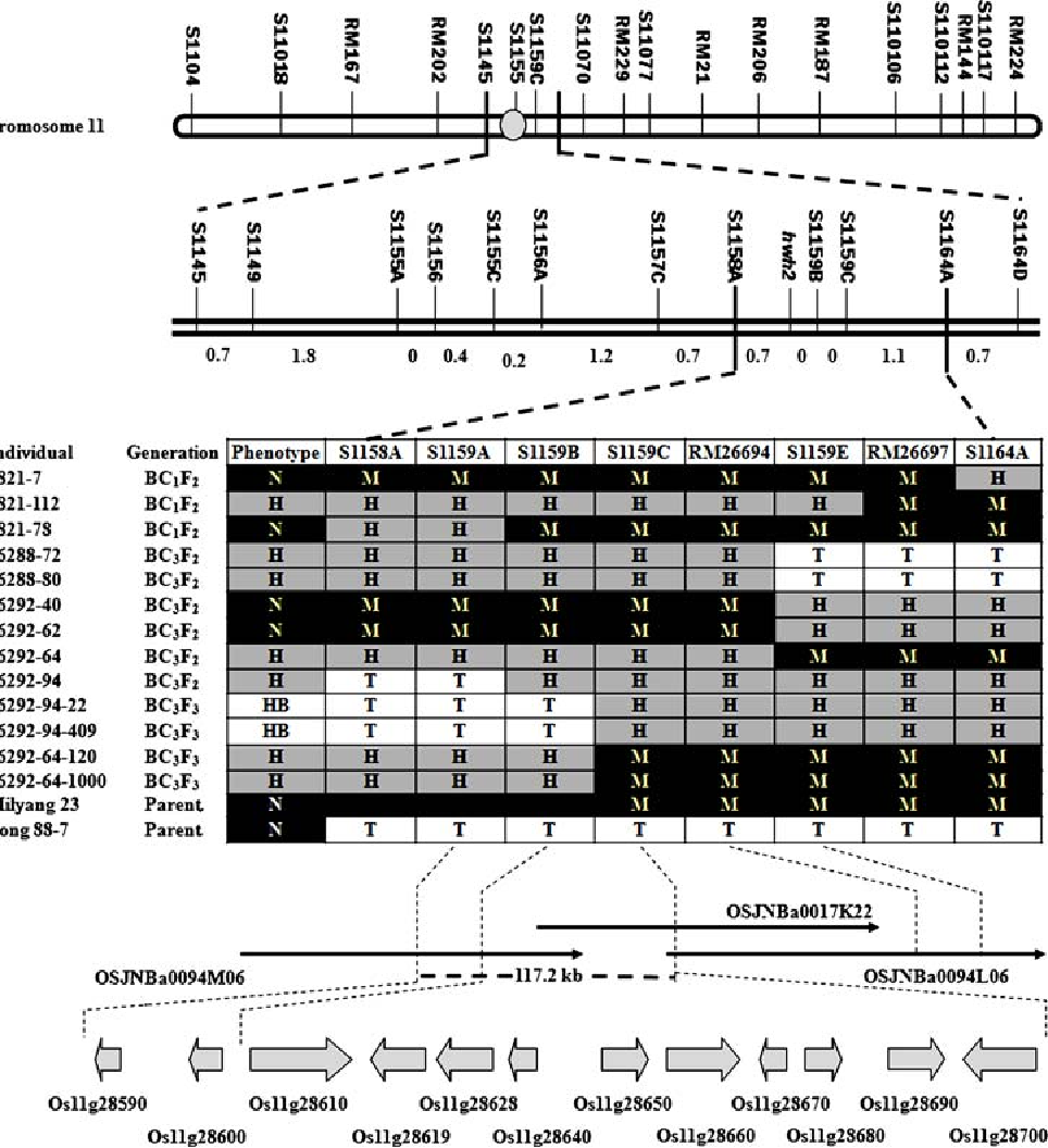 Figure 5 from Fine mapping and candidate gene ysis of hwh1 and ... on