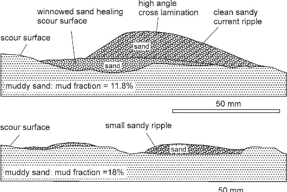Predicting Bedforms And Primary Current Stratification In Cohesive