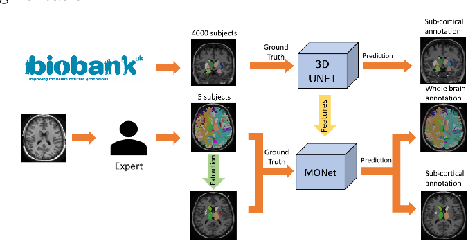 Figure 1 for Transfer Learning from Partial Annotations for Whole Brain Segmentation