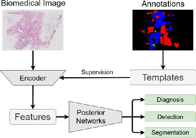 Figure 1 for T-Net: A Template-Supervised Network for Task-specific Feature Extraction in Biomedical Image Analysis